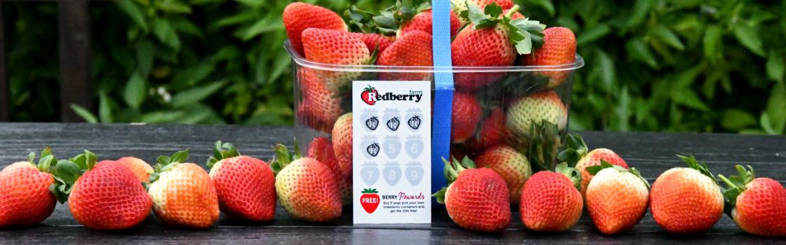 Berry Rewards Card